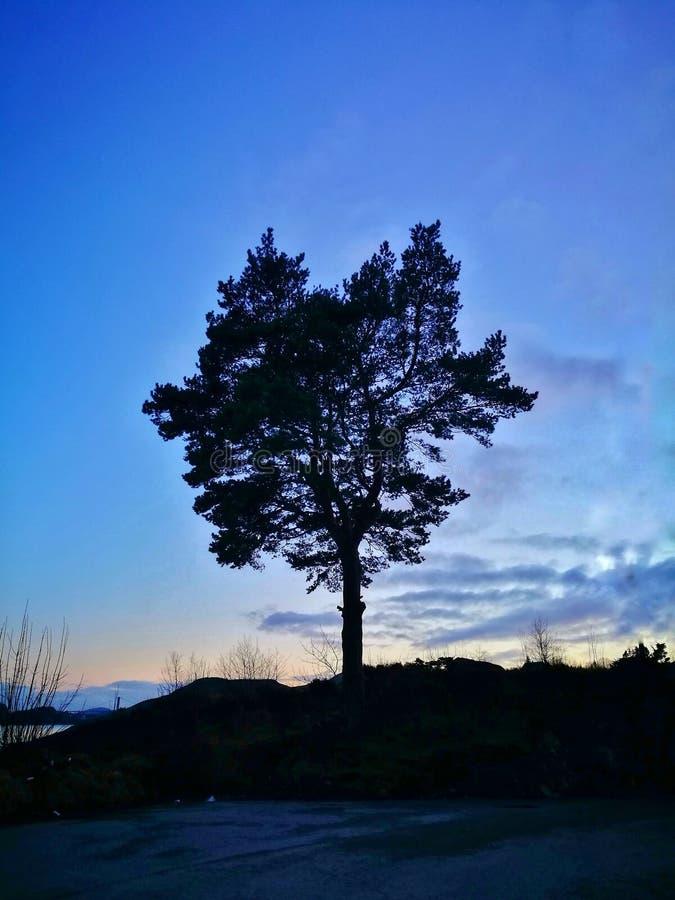 在黄昏的树 图库摄影