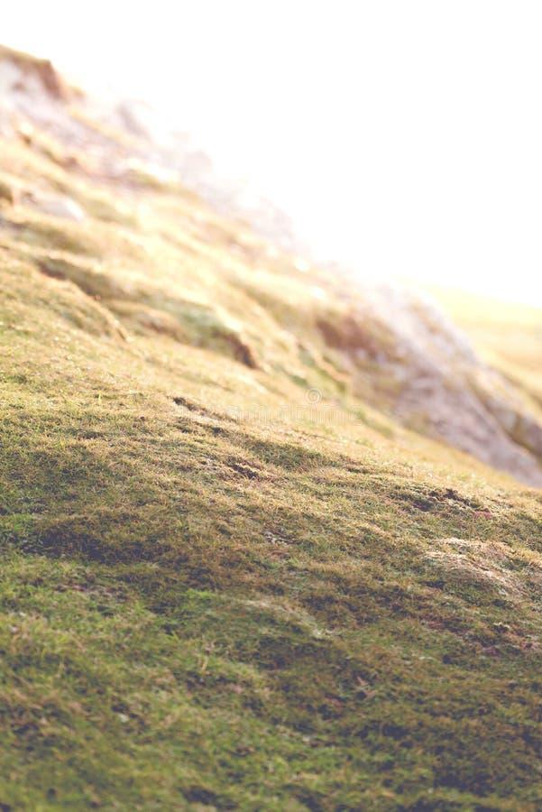 在黄昏的荒野山坡 免版税库存图片