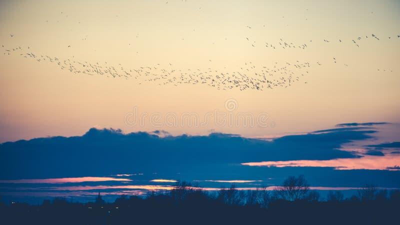 在黄昏的鸟 库存图片
