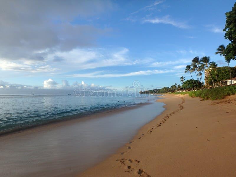 在黄昏的Kaanapali距离的海滩与树和拉奈岛 免版税库存照片
