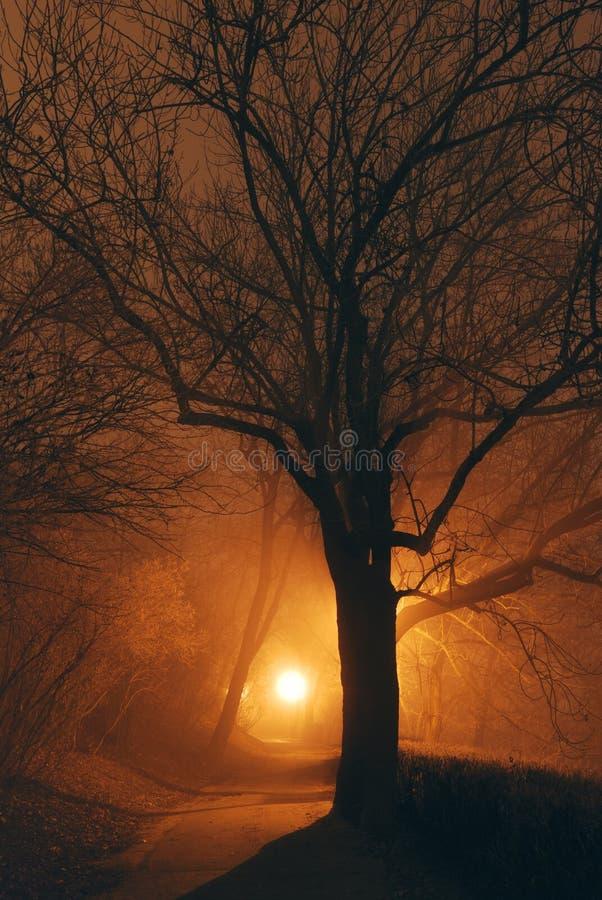 在黑暗和树剪影以后的神秘的森林公园 库存图片