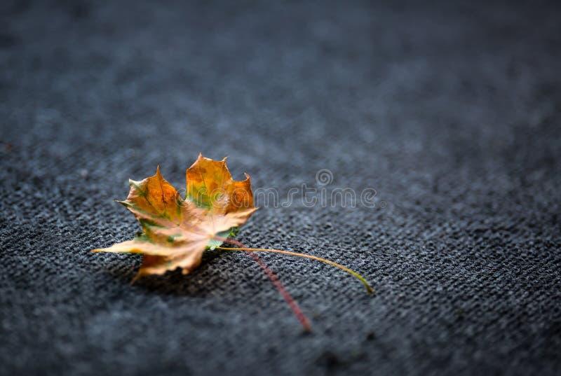 在黑暗的地毯一两自由地放置的秋叶 免版税库存图片
