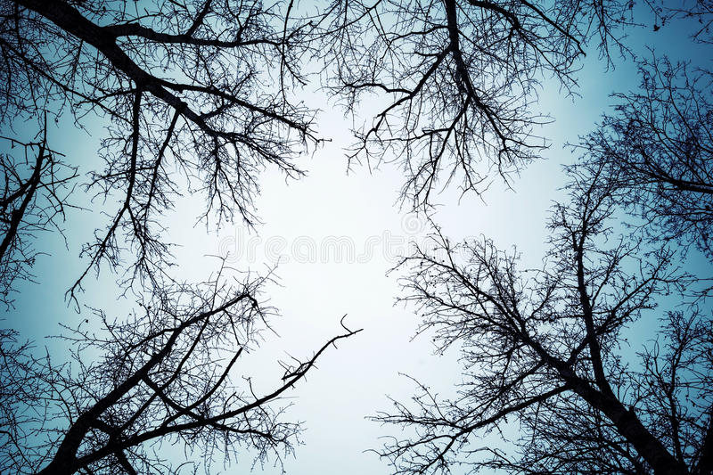 在黑暗的天空的黑不生叶的树剪影 免版税图库摄影