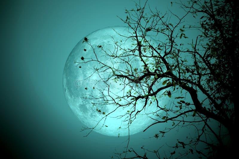 在满月的光秃的树在晚上 美国航空航天局装备的这个图象的元素 库存照片