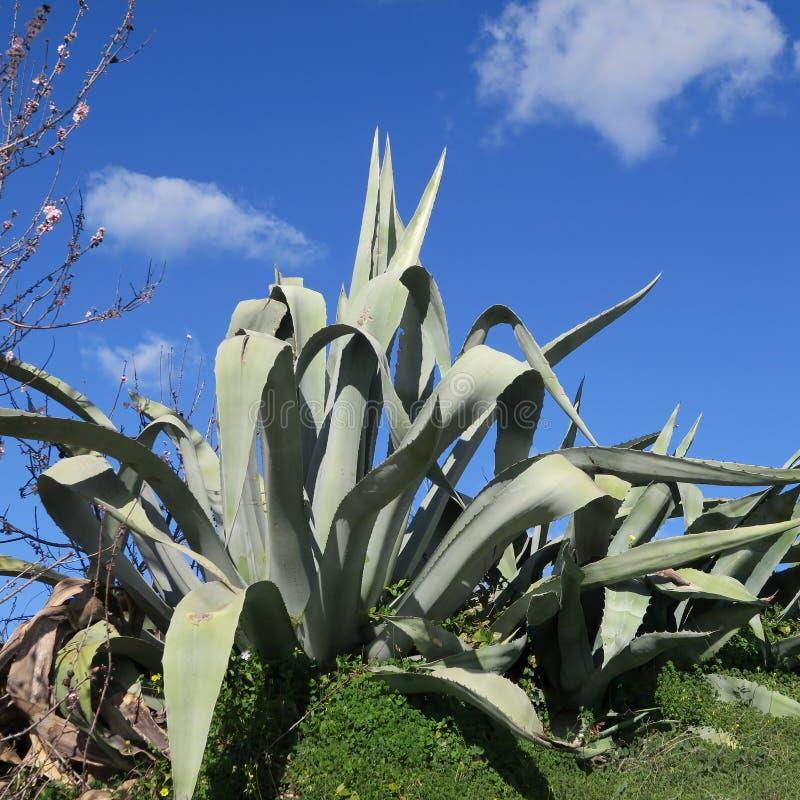 在2月风景花的春天在葡萄牙 库存照片