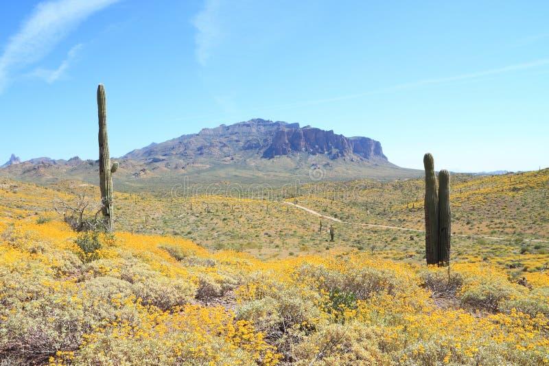 开花的Sonoran沙漠: 风景 免版税库存照片