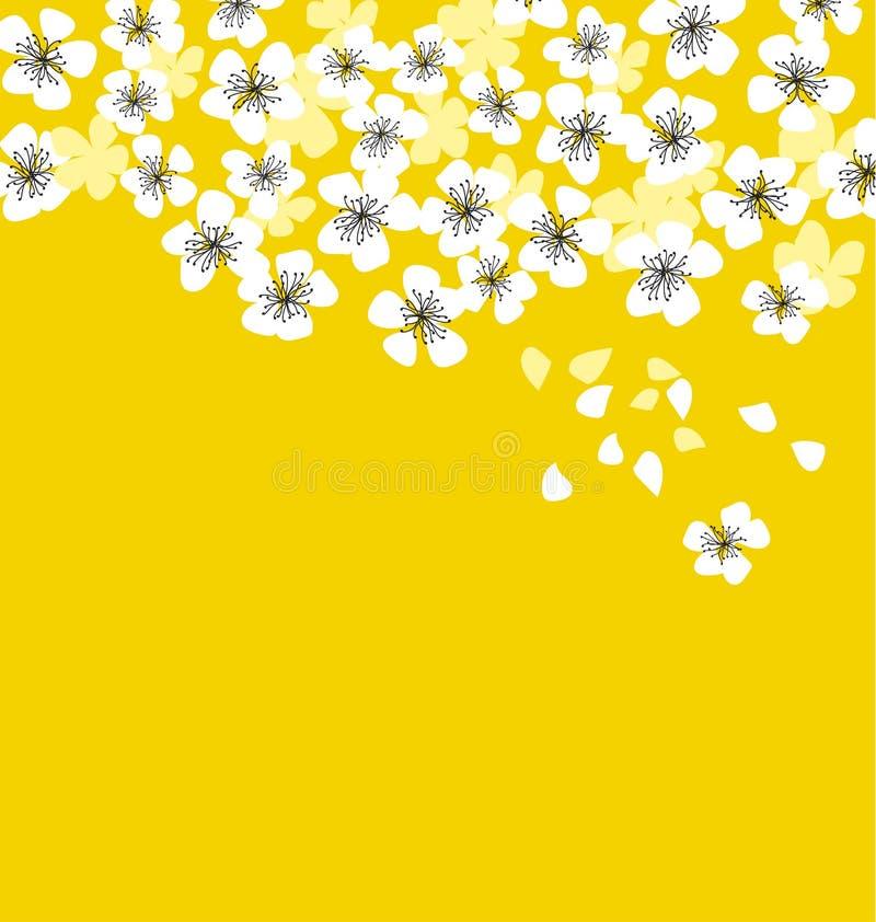 在晴朗的黄色背景的白色佐仓开花 库存例证