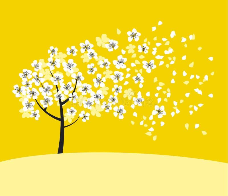 在晴朗的黄色背景的白色佐仓树开花 向量例证