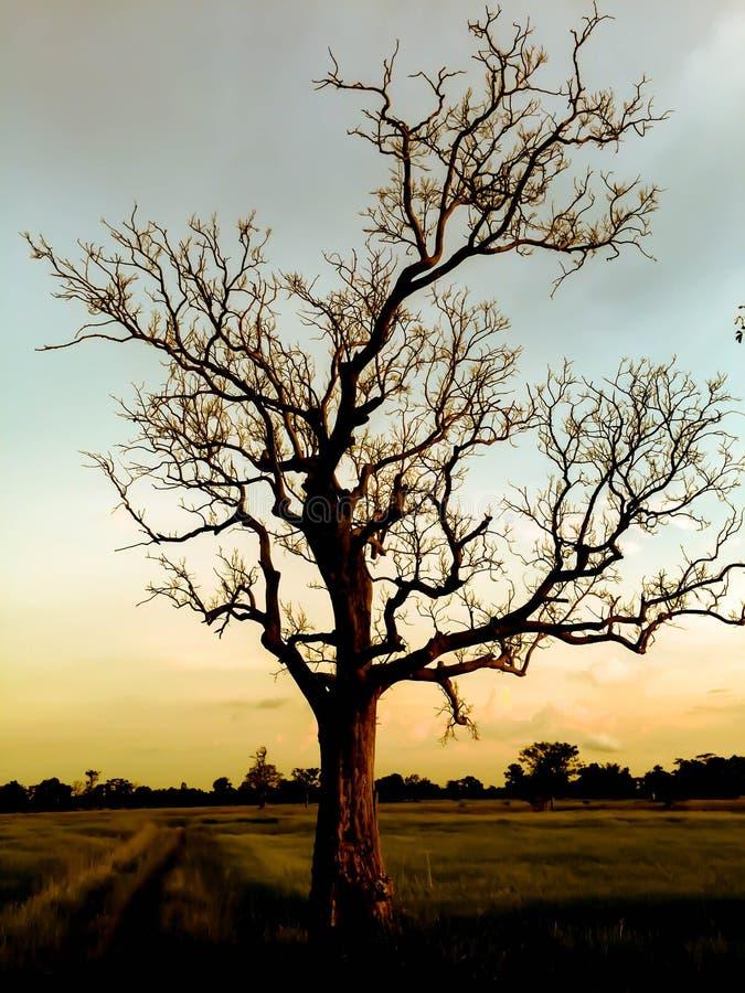 在晴朗的sunsrt的树 免版税库存图片