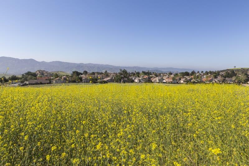 在洛杉矶附近的郊区田芥菜草甸 免版税库存图片
