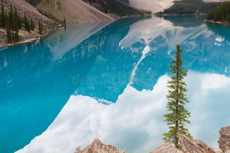 在绿松石梦莲湖的杉树 库存照片