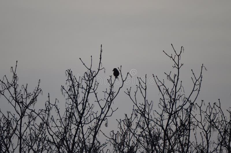 在结构树的乌鸦 免版税图库摄影