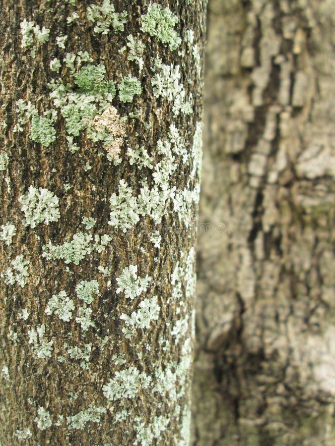 Download 在结构树的地衣 库存照片. 图片 包括有 宏指令, 皮肤, 叶子, 工厂, 绿色, 有机, 详细资料, 抽象 - 62525978