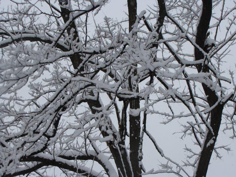 在结构树的雪 免版税库存照片