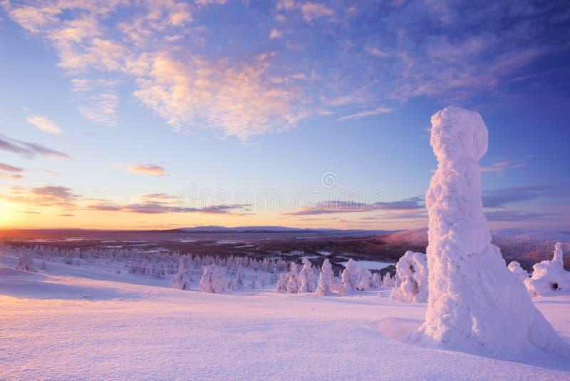 在冻树的日落在山,莱维,芬兰拉普兰 免版税库存图片