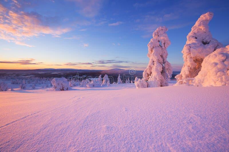 在冻树的日落在芬兰拉普兰 免版税库存照片