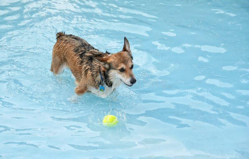 在水池的一条逗人喜爱的狗 免版税库存图片