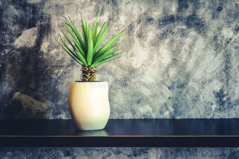 在水泥墙壁附近的绿色装饰植物,土气家庭interi 免版税库存照片