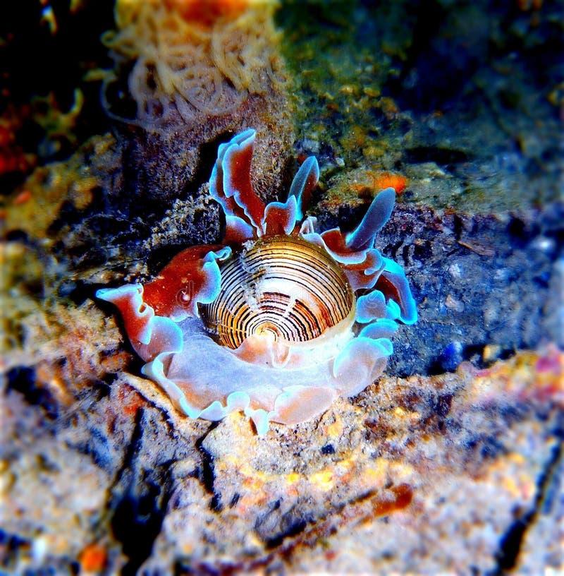 在水海洋蜗牛下 库存照片