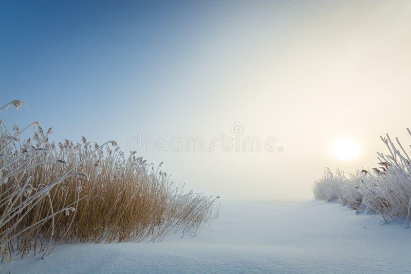 在冻湖的冻干草 图库摄影