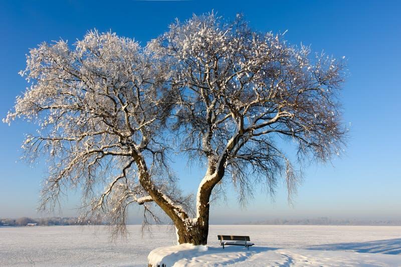 在冻湖II的斯诺伊树 免版税库存照片