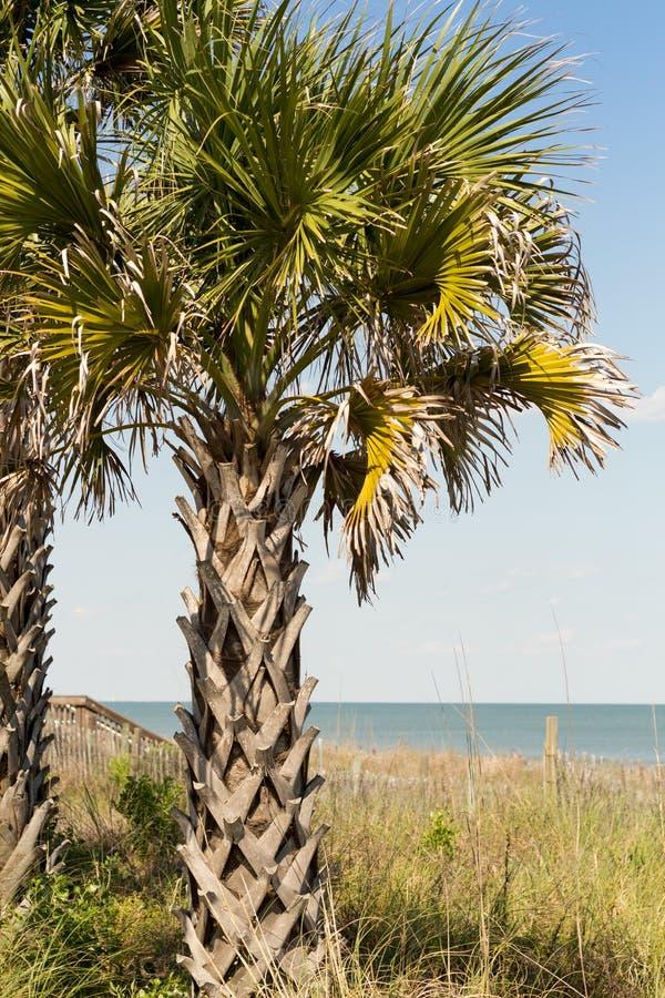 在默特尔海滩东部海岸线的棕榈树在木板走道 免版税库存图片