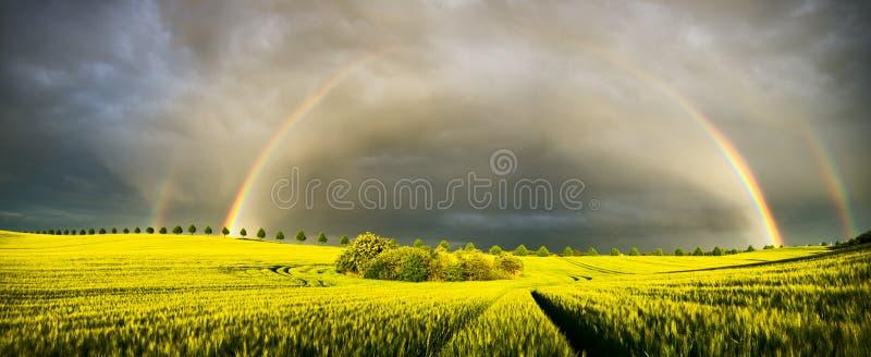 在年轻玉米的领域的彩虹 免版税库存照片