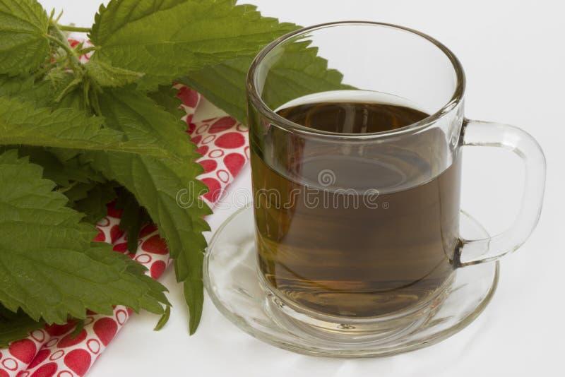 在玻璃和新鲜的荨麻的荨麻茶 图库摄影