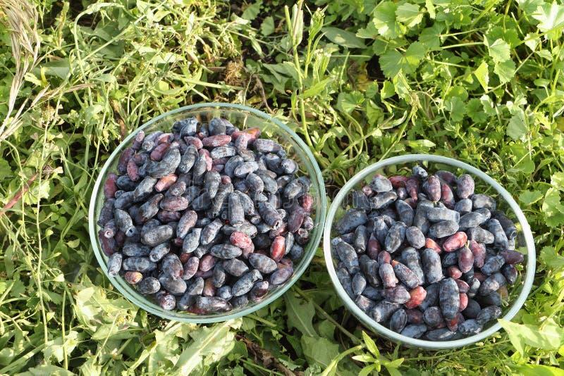 在玻璃板的忍冬属植物莓果 免版税库存图片