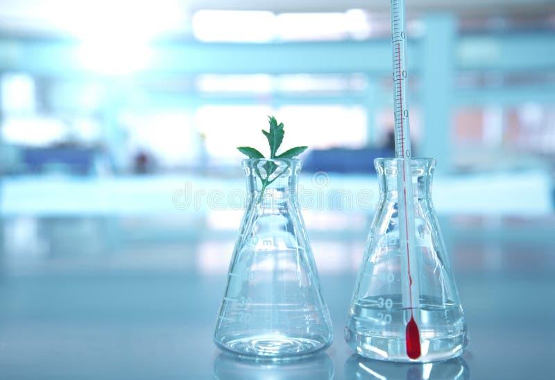 在玻璃烧瓶的温度计有植物的在科学实验室 免版税库存照片