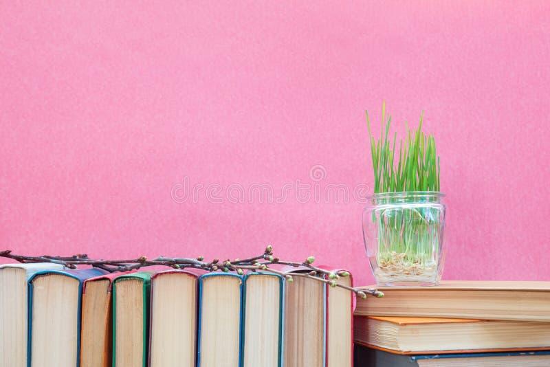 在玻璃瓶子的发芽的麦子在书 库存图片