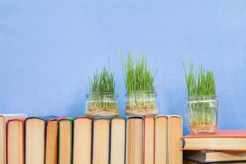 在玻璃瓶子的发芽的麦子在书 免版税库存照片