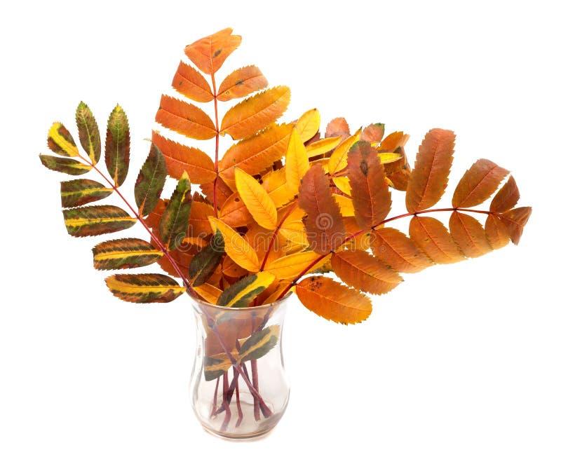 在玻璃的多色秋天花揪叶子 免版税库存照片