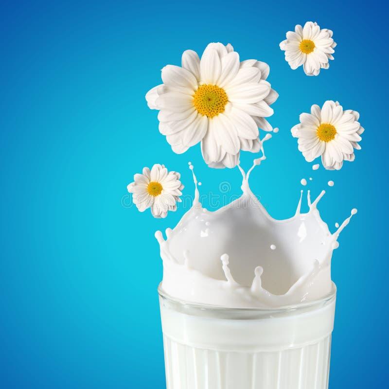在玻璃的新鲜的牛奶 免版税库存图片