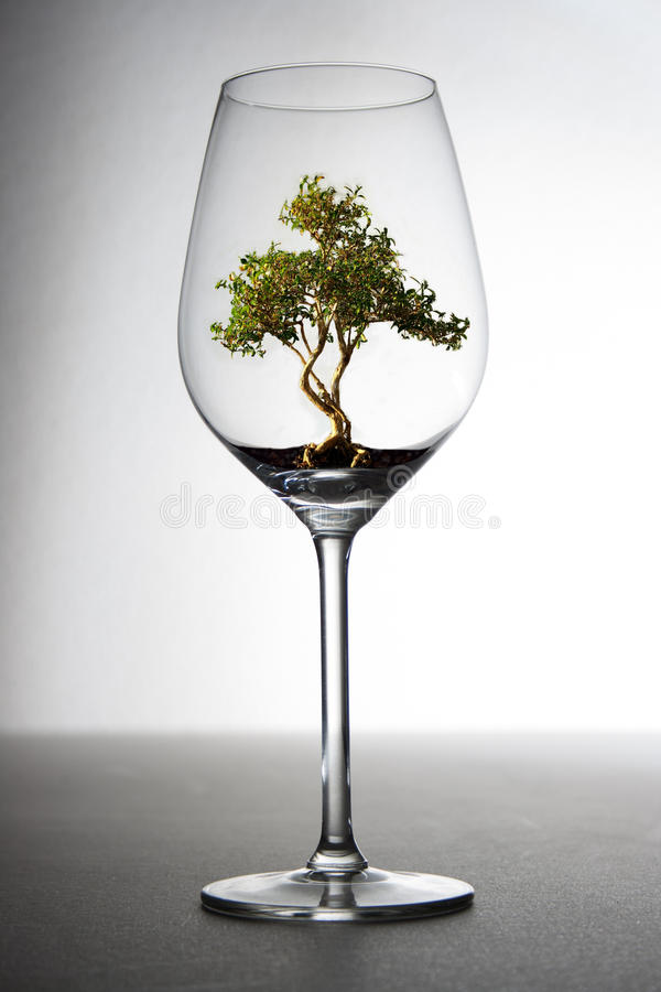 在玻璃的树 库存图片