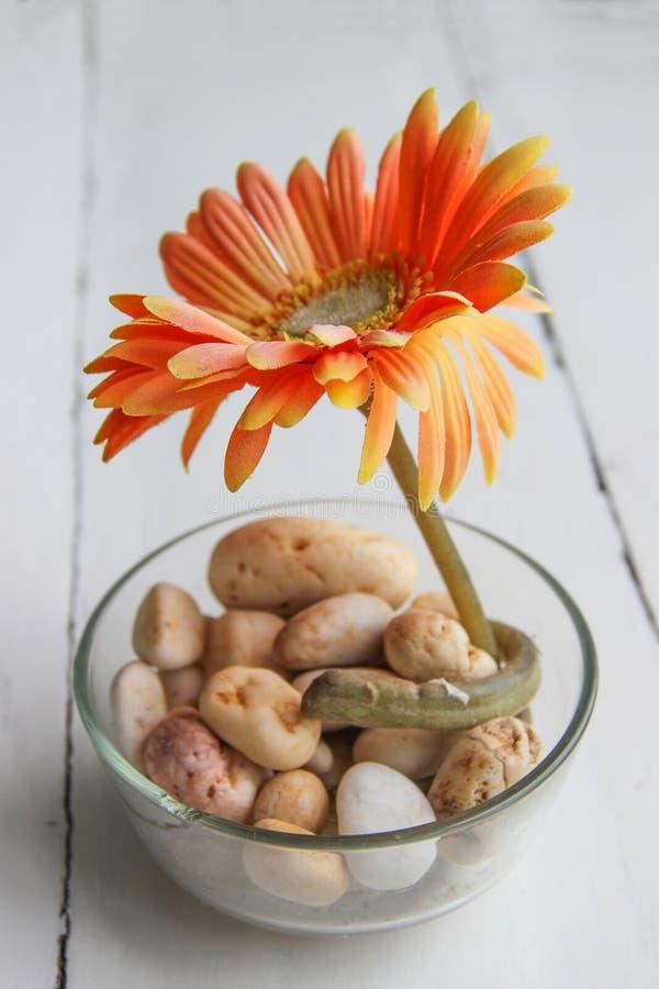 在玻璃的非洲雏菊在木背景 图库摄影