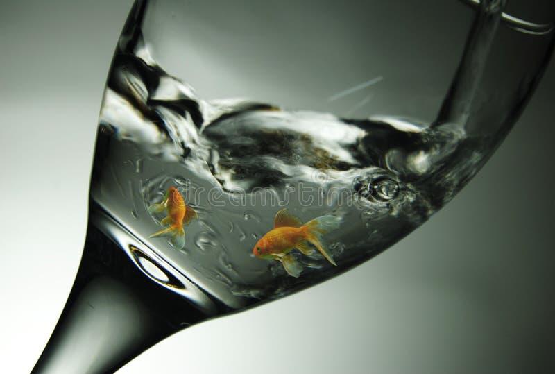 在玻璃的鱼 图库摄影