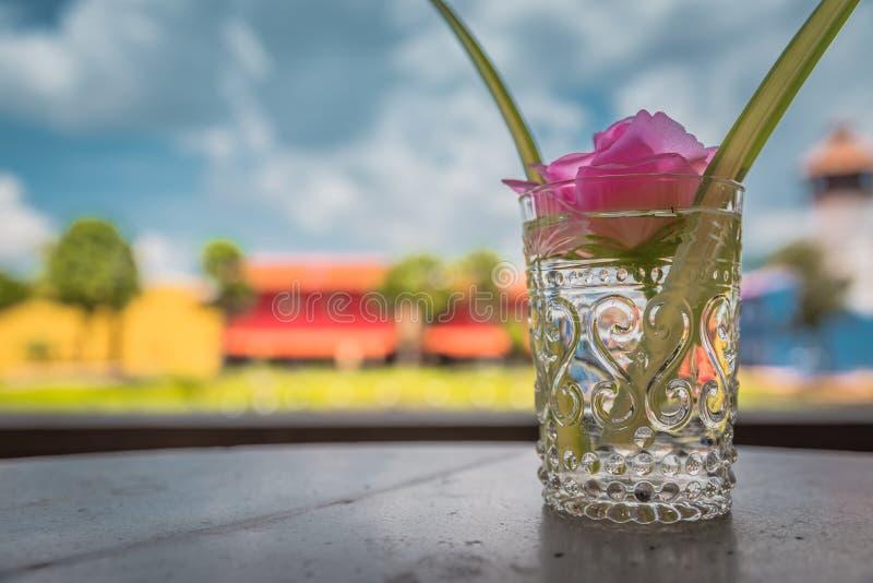 在玻璃花瓶的美丽的桃红色花 免版税库存照片