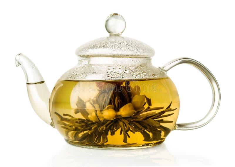 在玻璃茶壶的开花的绿茶 库存图片