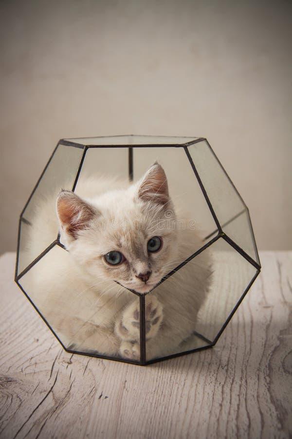 在玻璃florarium的小猫 免版税库存图片