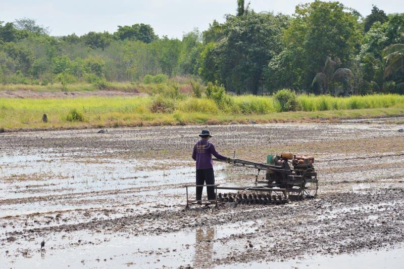 在稻田的人耕犁 免版税库存图片
