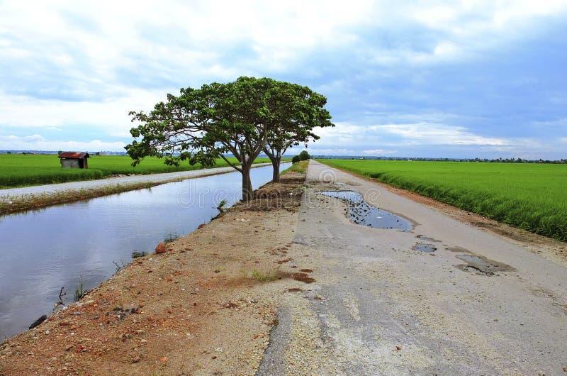 在稻田的小路 免版税库存照片
