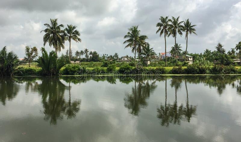 在稻田的椰子树夏令时 库存图片