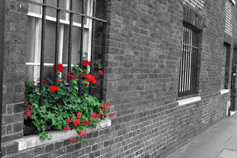 在黑白井的红色花 库存照片