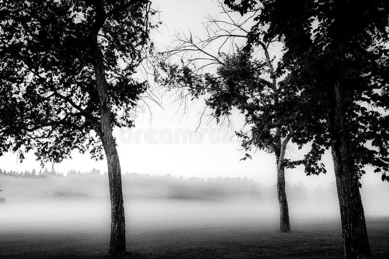 黑白雾 免版税库存图片