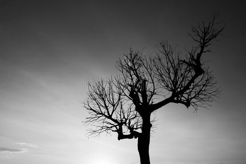 在黑白的唯一光秃的树 库存图片
