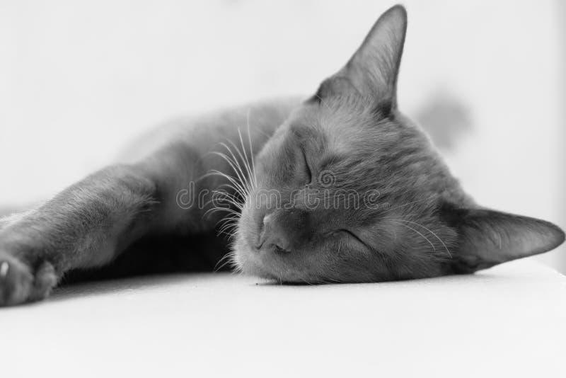 在黑白的松弛猫 免版税库存图片