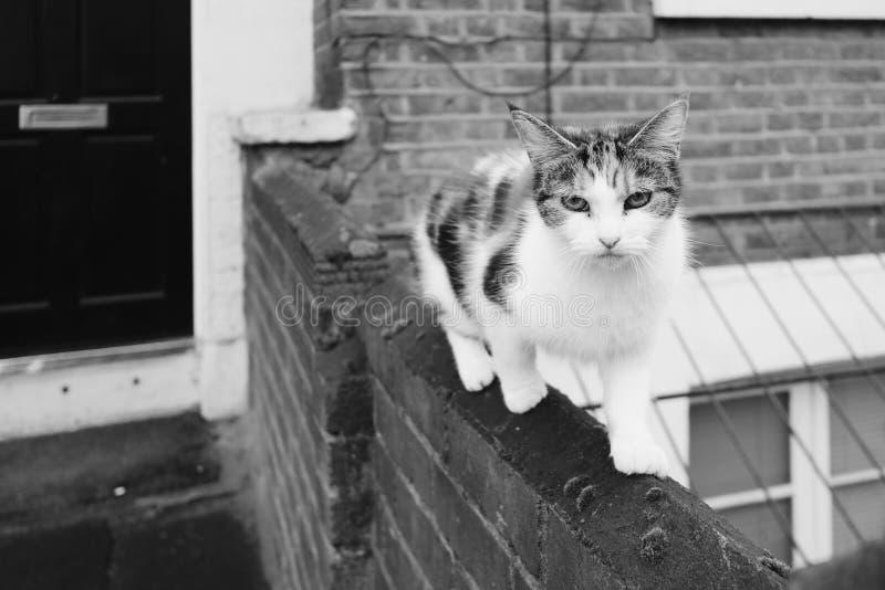 在黑白的爬行的农村猫 免版税图库摄影