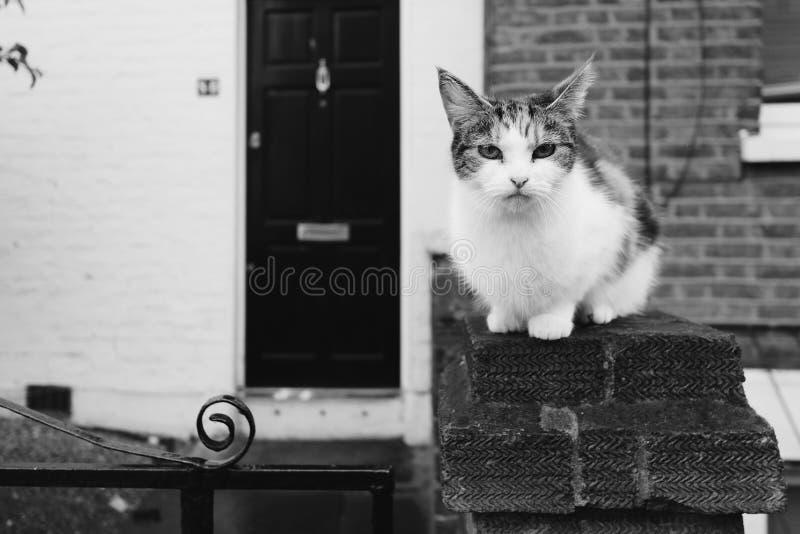 在黑白的蹲下的农村猫 免版税图库摄影