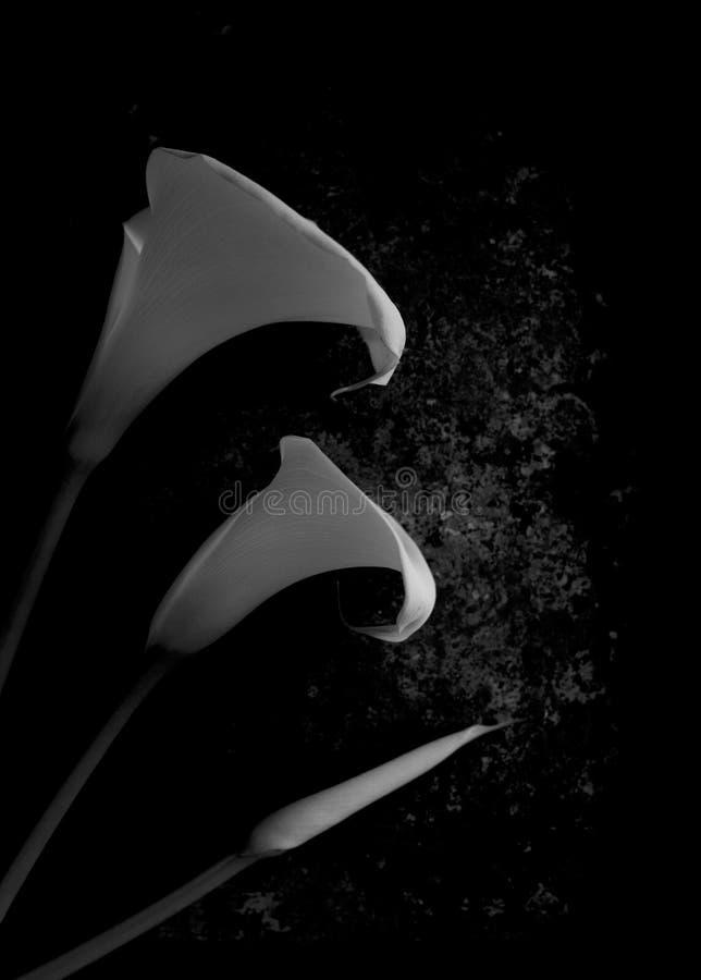 在黑白的Lillies 免版税库存照片